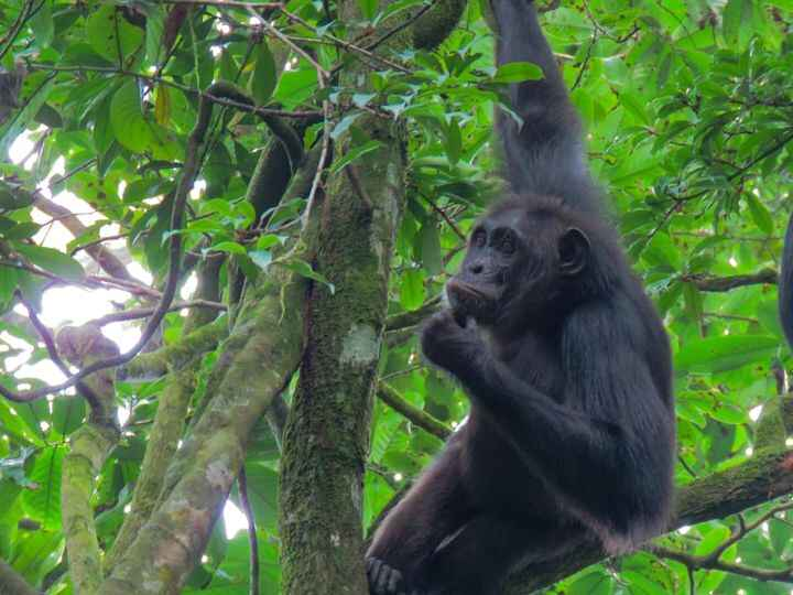 Photos from Kibale Forest Lodge's post