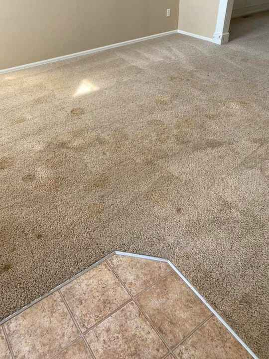 Photos from Cleopatra Carpet Care's post